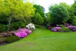 ogród z pięknym trawnikiem